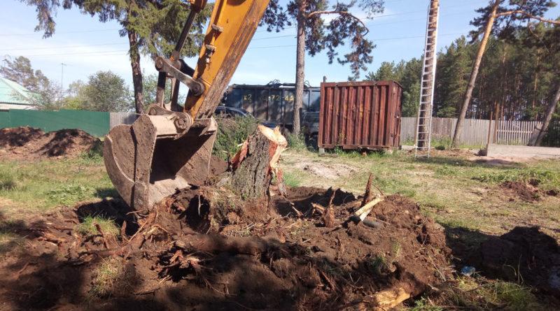 выкорчевывать дерево