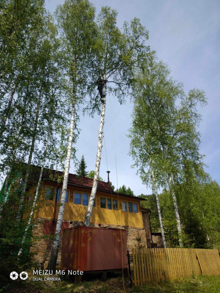 Рубка деревьев самостоятельно во дворе собственного дома