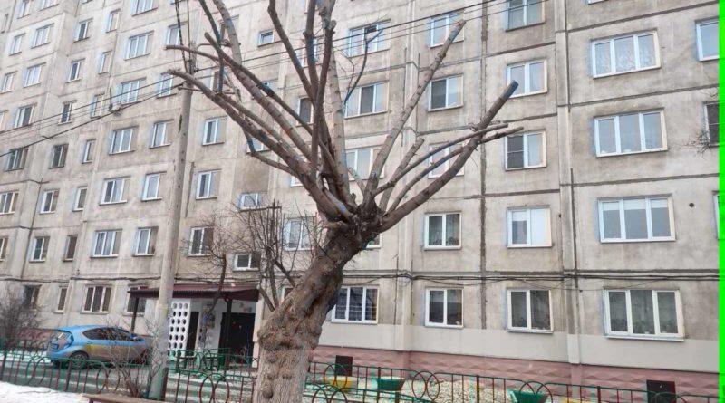 Обрезка деревьев в городе