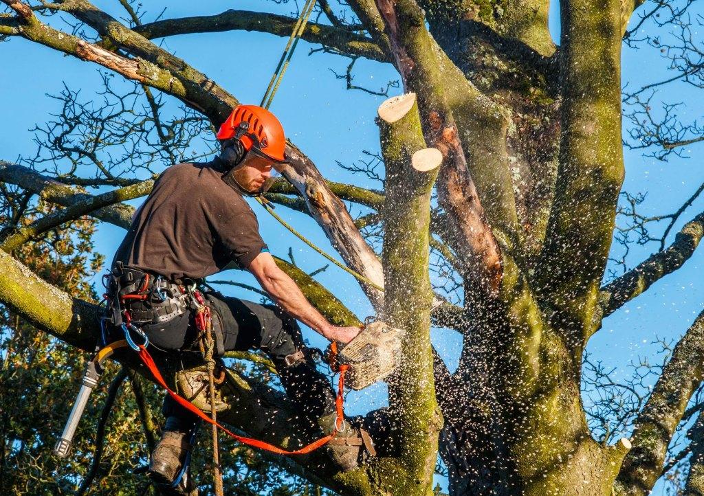 спилить дерево цена