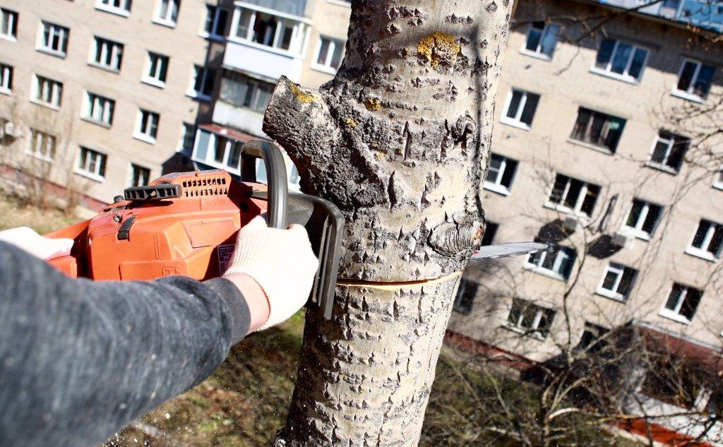 спилить дерево +на +своем участке