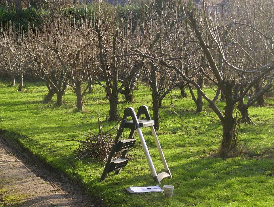 обрезка деревьев красноярск
