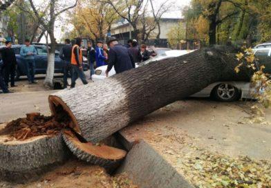 Спилить дерево обратиться куда?