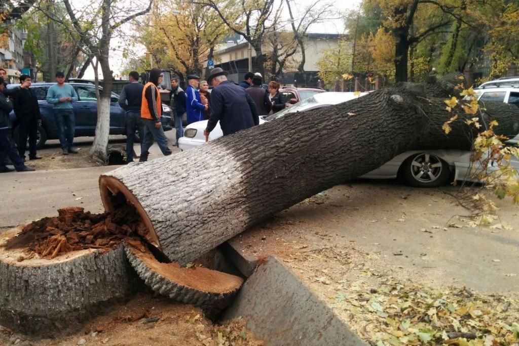 спил деревьев Красноярск