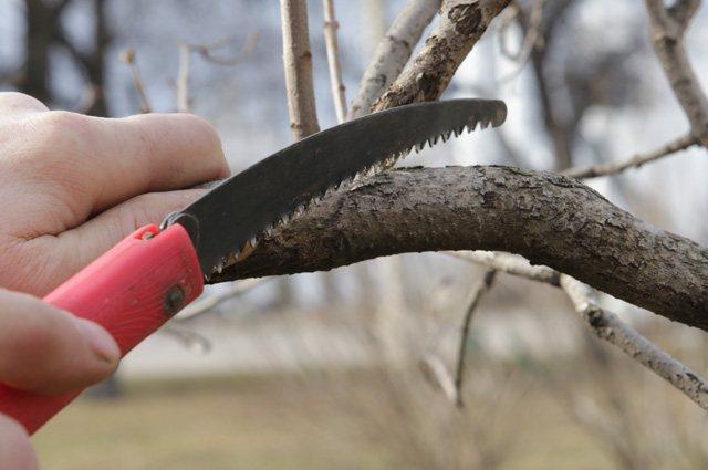 10 правил обрезки плодовых деревьев осенью