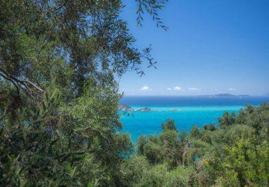 Оливковые рощи на Корфу